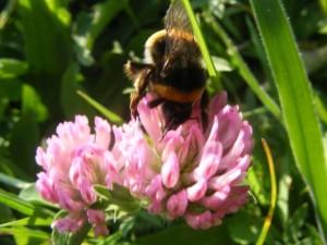 Las abejas también están trabajando